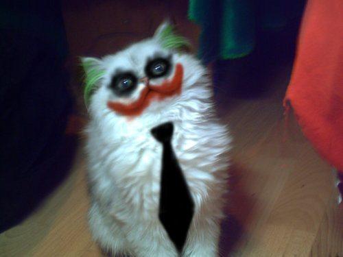 Joker Pussy