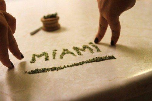Miami Bud