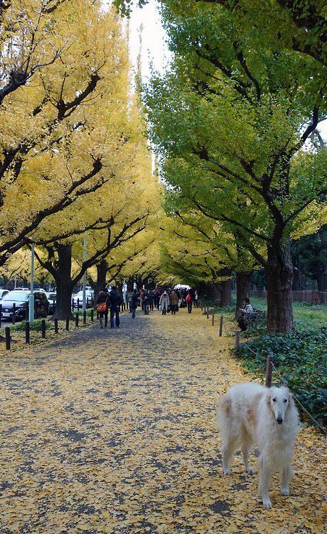 Aoyama Tokyo