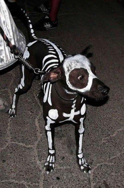 skeleton pup