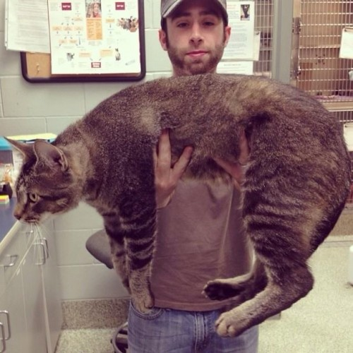 Phat Cat