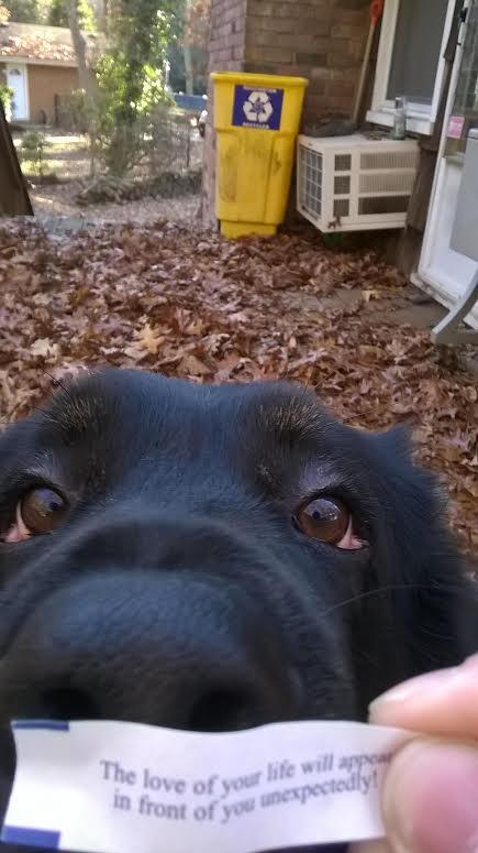 Pup Love